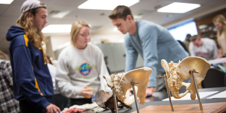 People working with bones in an anthropology lab