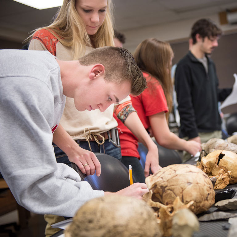 Students work with bones in a lab