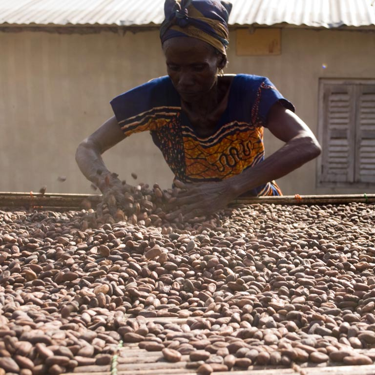 A woman works with a crate full of cocoa beans